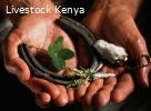 +27739645035[Best Traditional Healer,Love Spells,in dubai,uk