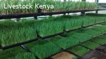 Hydroponic fodder solutions trays